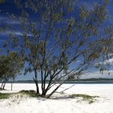Traumstrand bei Inskip Point im Great Sandy N.P.