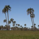 Der Nationalpark El Palmar in Entre Rios