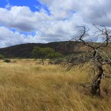 Gawler Ranges Nationalpark